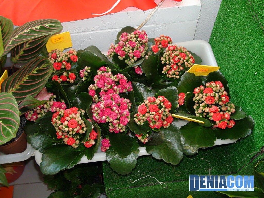 Macetitas en Denia – Floristeria Mandarina