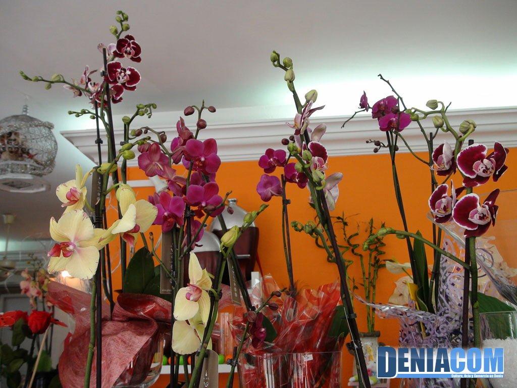 Orquideas – Floristeria Mandarina