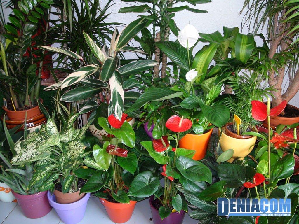 Plantas decorativas en Denia – Floristeria Mandarina