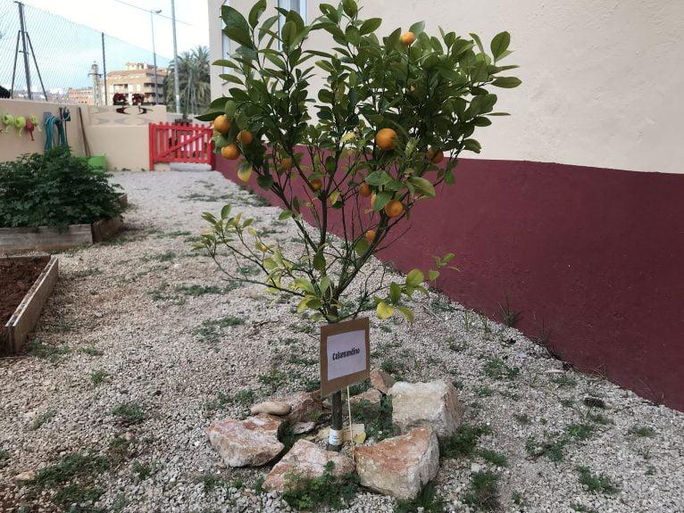 Árbol frutal huerto - Escoleta El Castellet