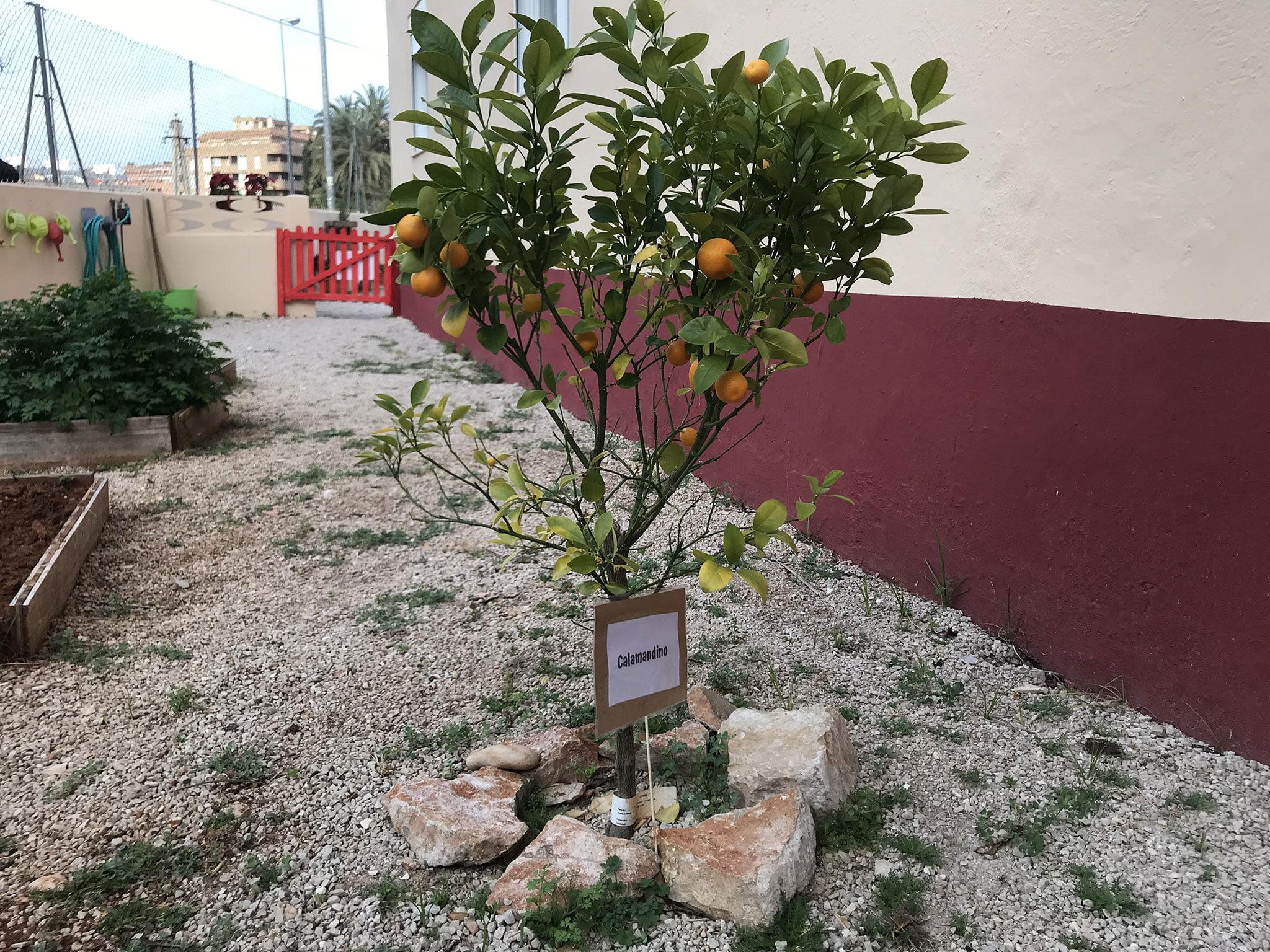 Arbre fruiter hort - Escoleta El Castellet