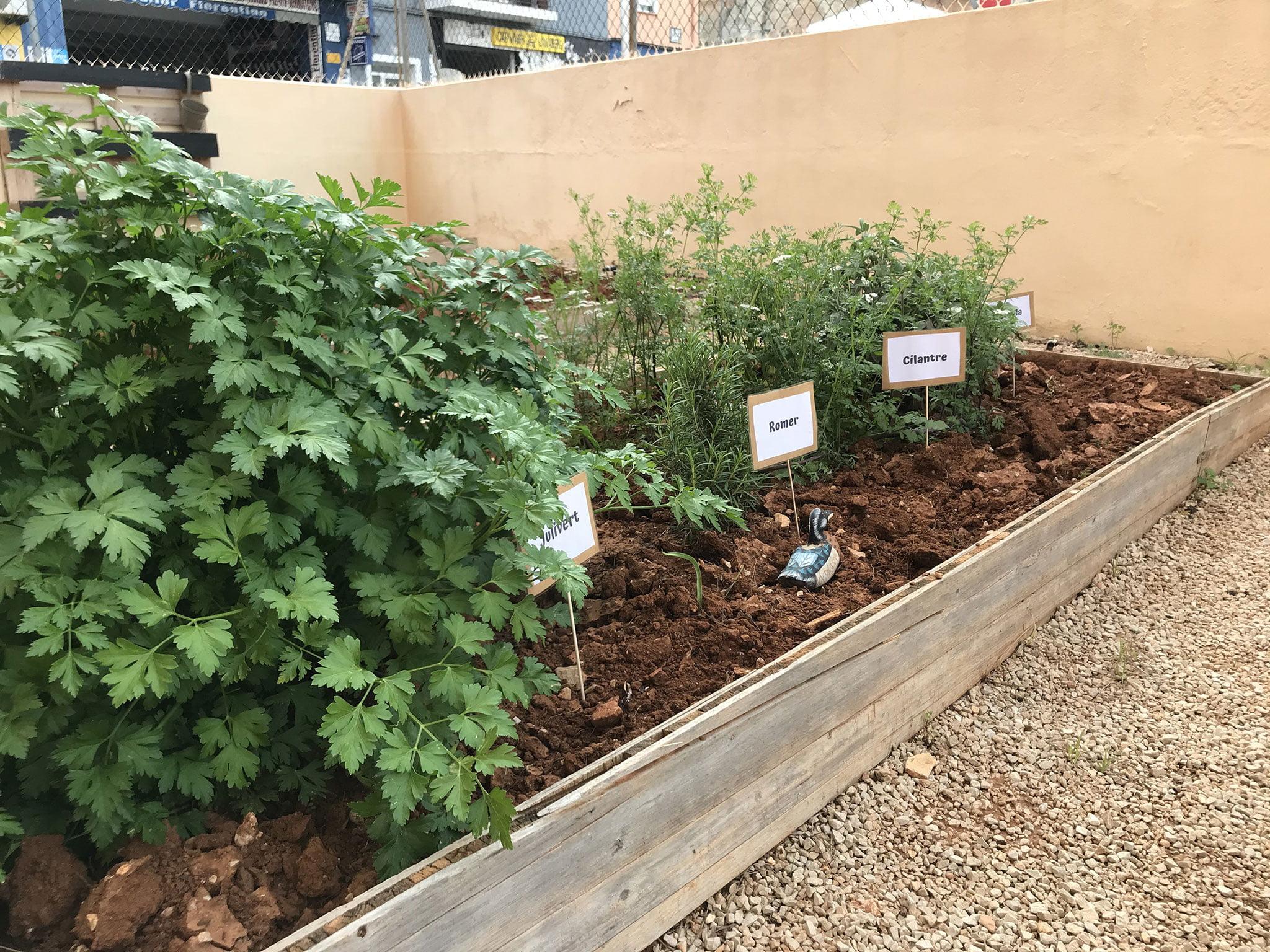 Herbes aromàtiques - Hort Escoleta El Castellet