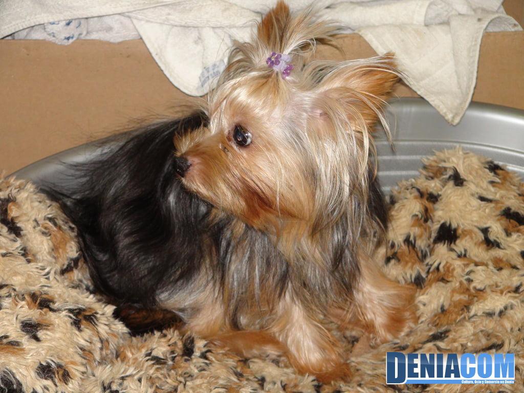 Mascotetes - Perruqueria canina i felina