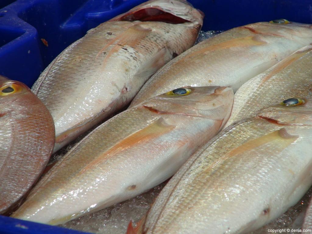 Mercado Municipal de Dénia – Pescado