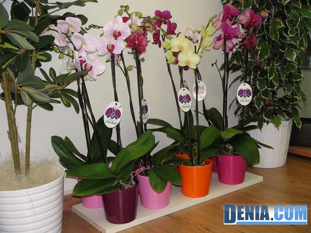 Orquídea, floristeria con amplio surtido en orquídeas de todos los colores.