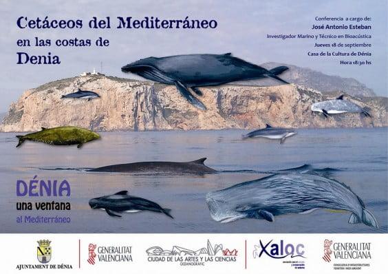 Conferencia sobre cetáceos en las cosatas de Dénia