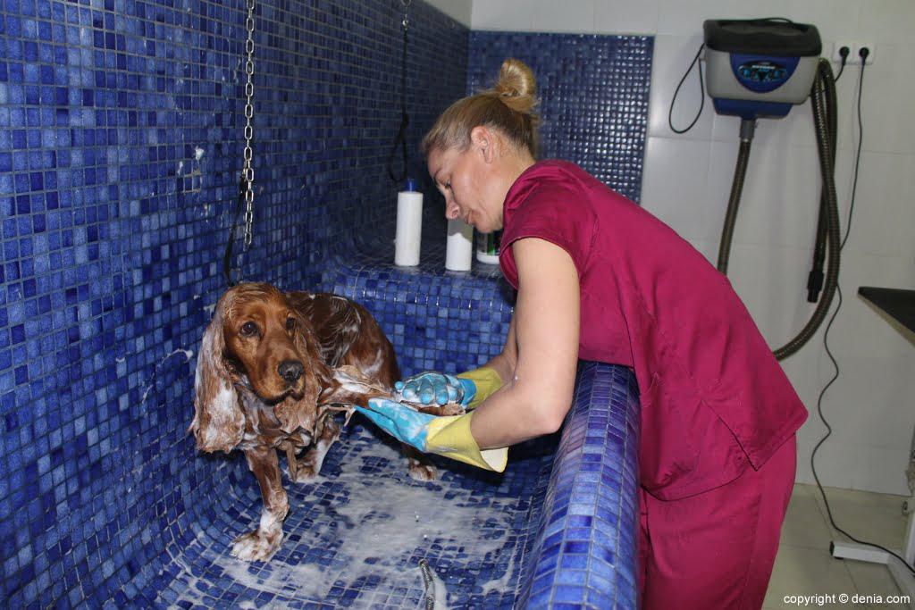 Baño para mascotas en Santi Mas – Servicios para mascotas