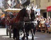 Participación de caballos en la festividad de San Antonio de Dénia