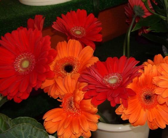 Flores para chico en Mandarina