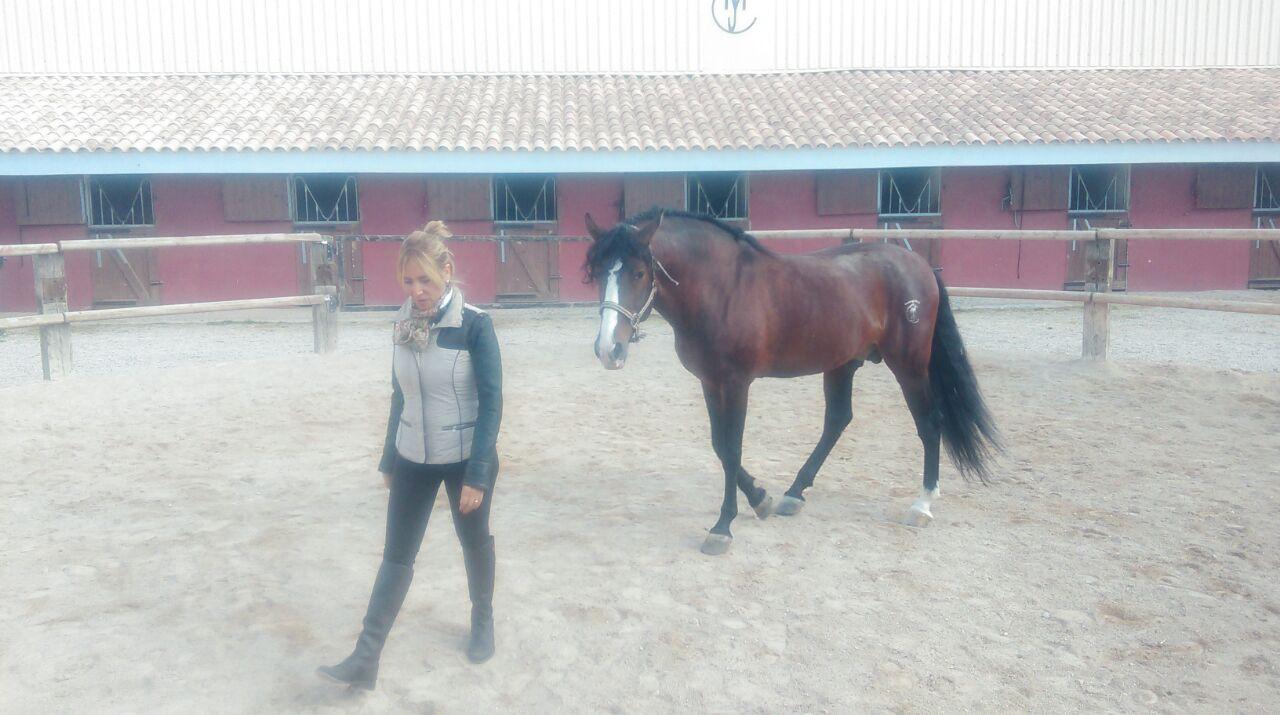 talleres con caballos