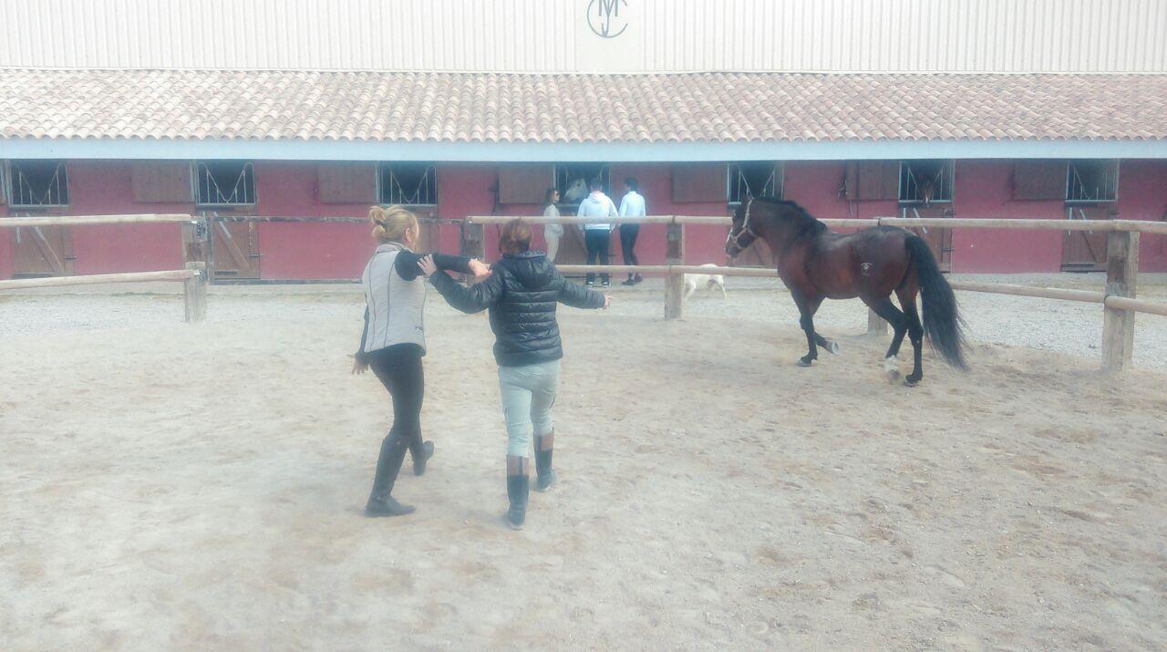 training con caballos