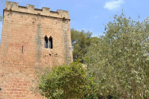 Tala de pinos en el Castillo