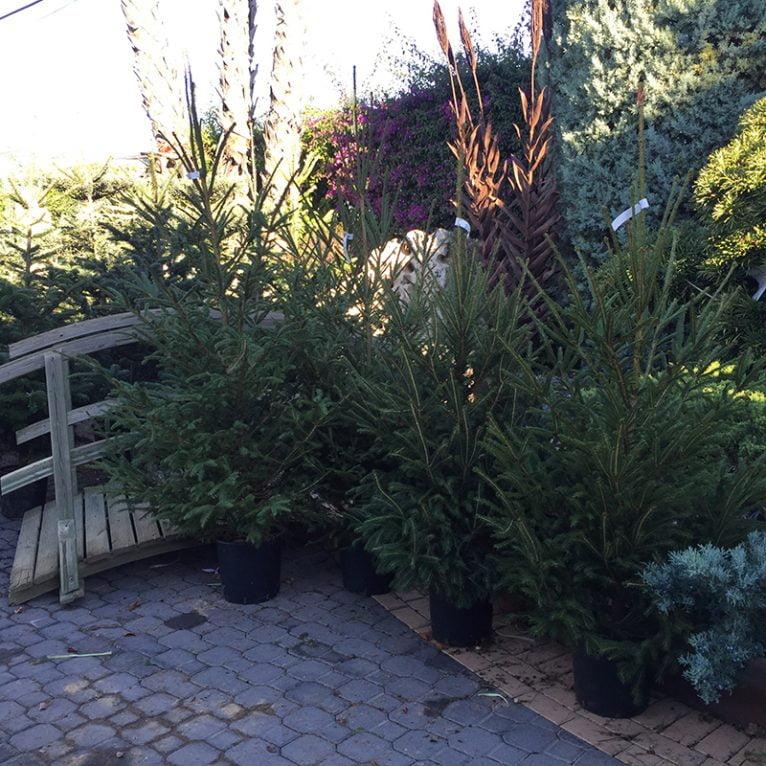 Arbre Natura Garden