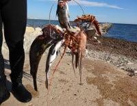 Pesca furtiva en la Reserva Marina del Cabo de San Antonio