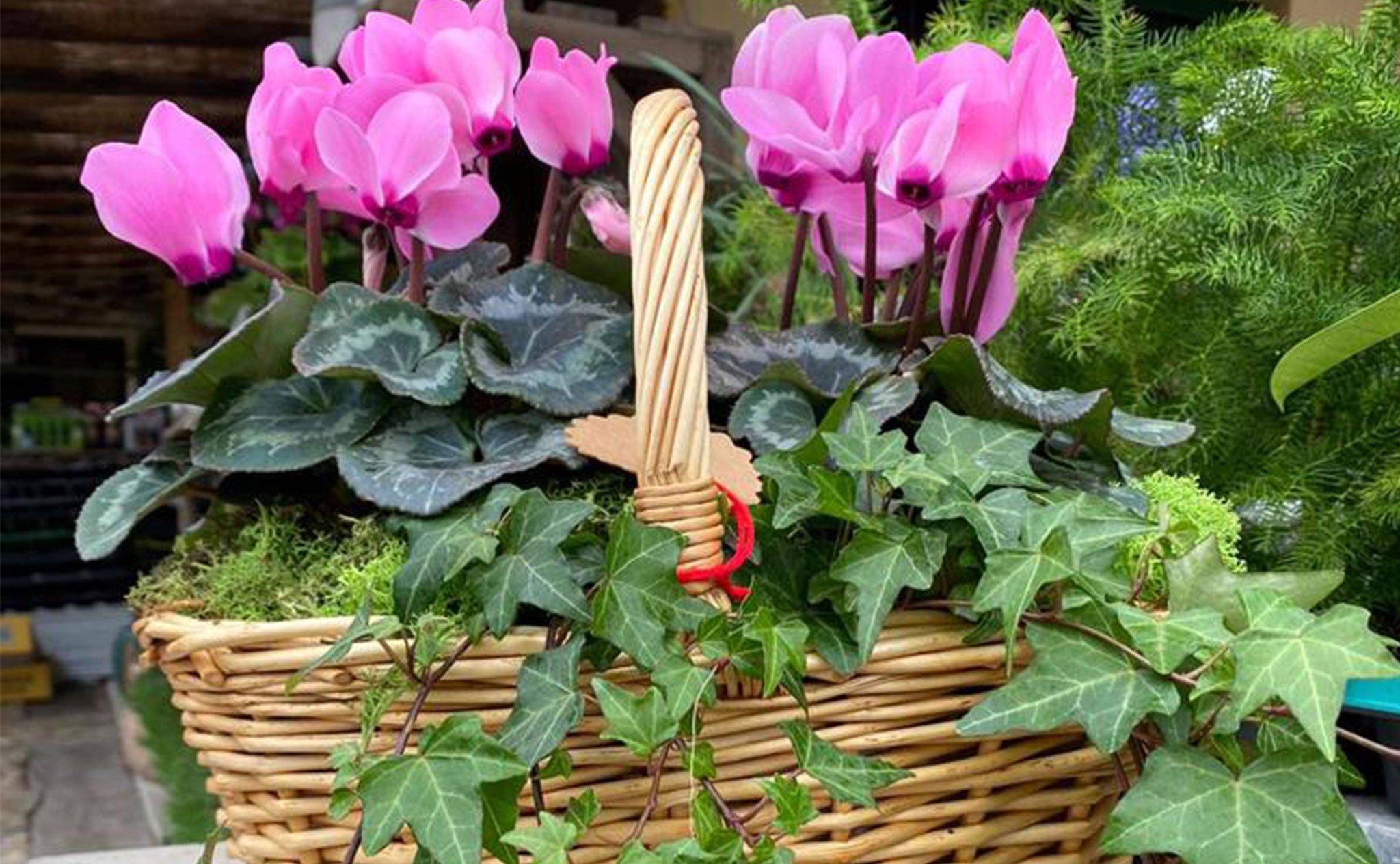 Panier avec plantes et fleurs du jardin Natura