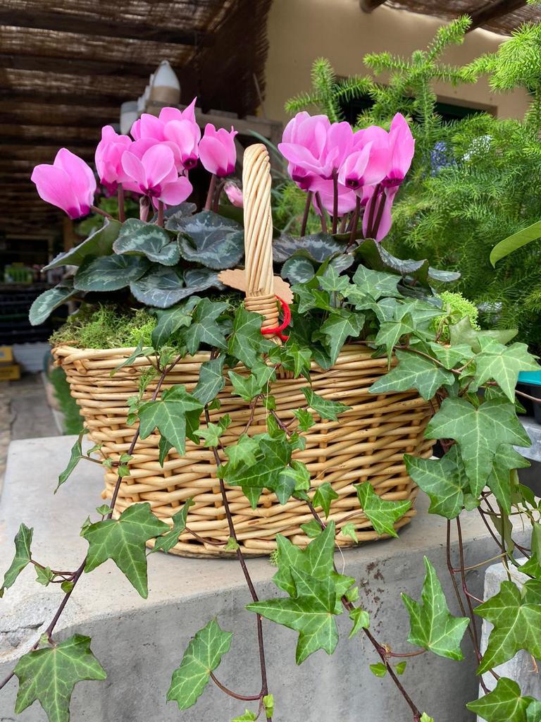 Panier avec plantes et fleurs - Natura Garden