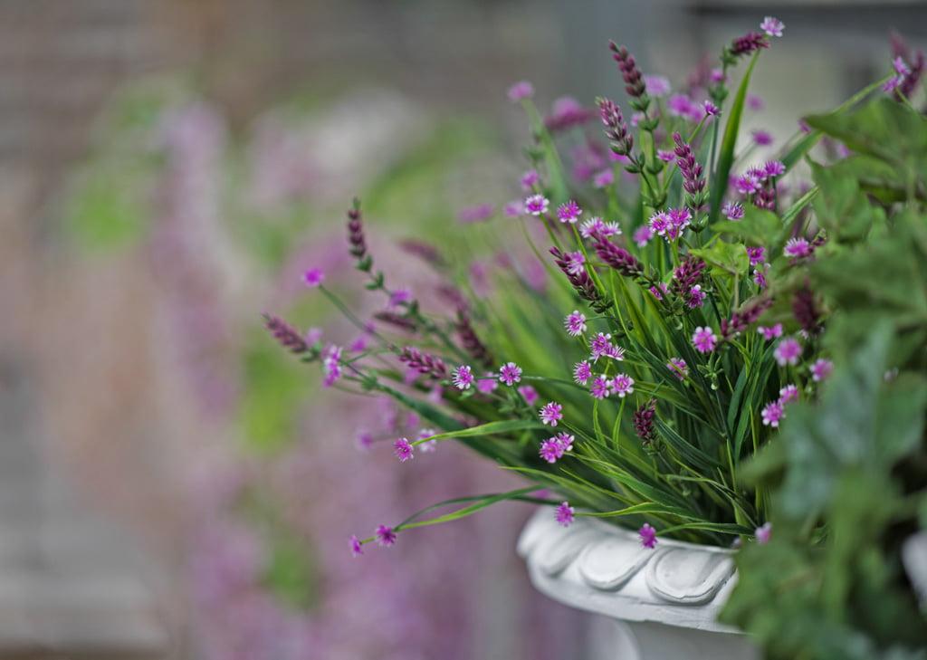 Dénia Natura Garden Pots de fleurs