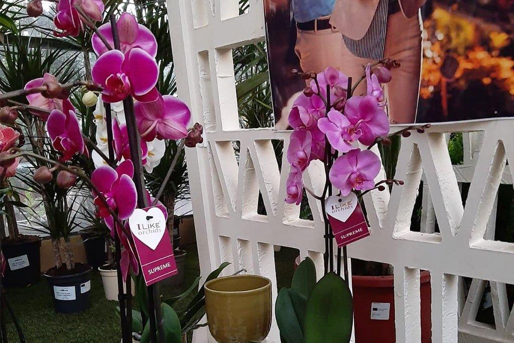 Natura Garden tire une orchidée