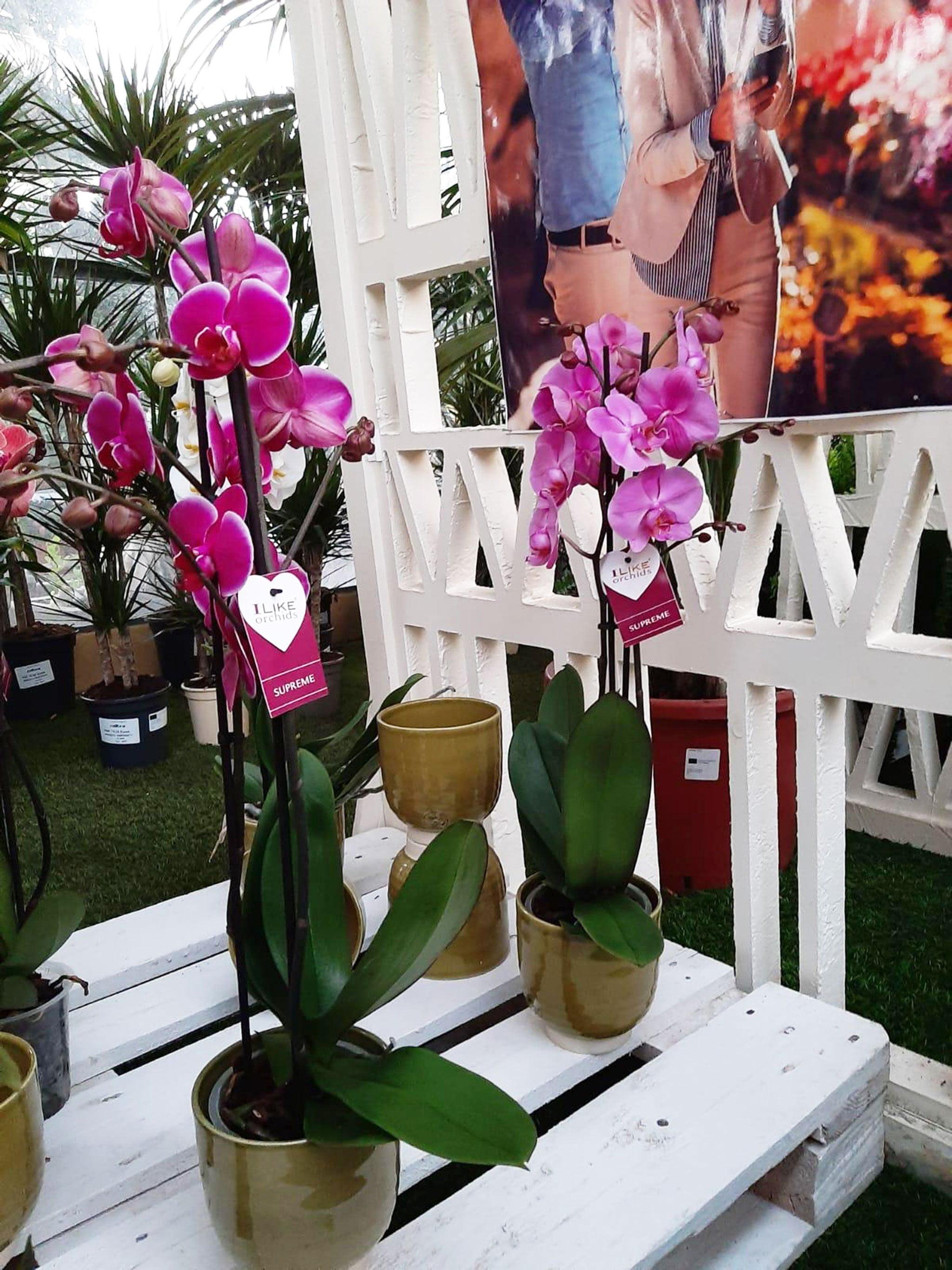 Obtenez cette orchidée en participant à la tombola Natura Garden