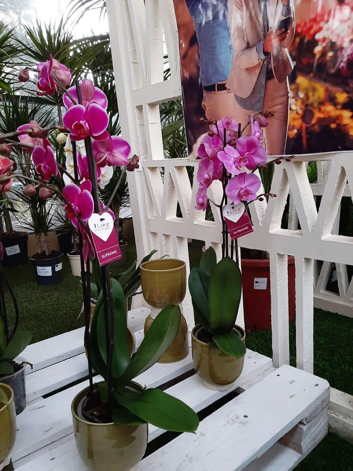 orchidée-nature-jardin