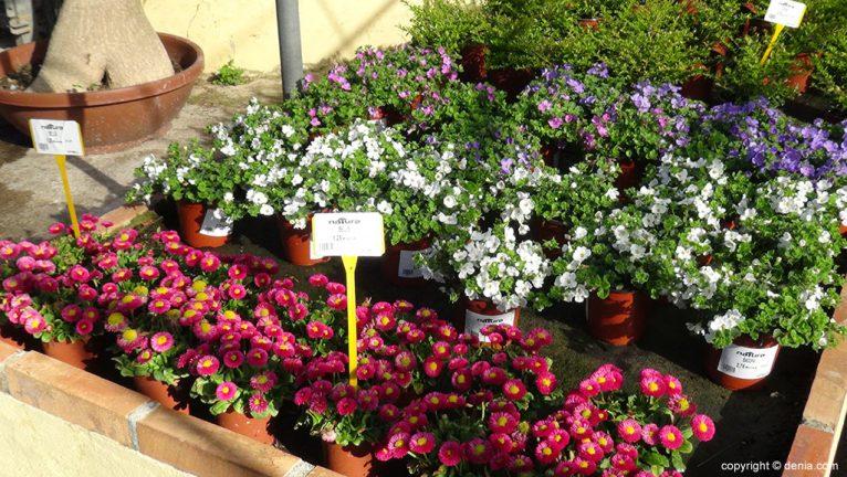 plantas de temporada