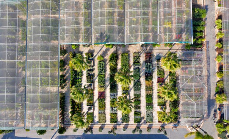 Plantas Dénia Natura Garden