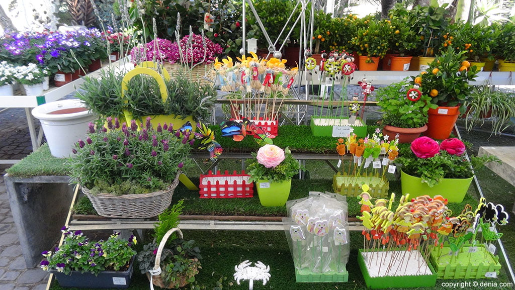 Plantas vivero d for Plantas de vivero