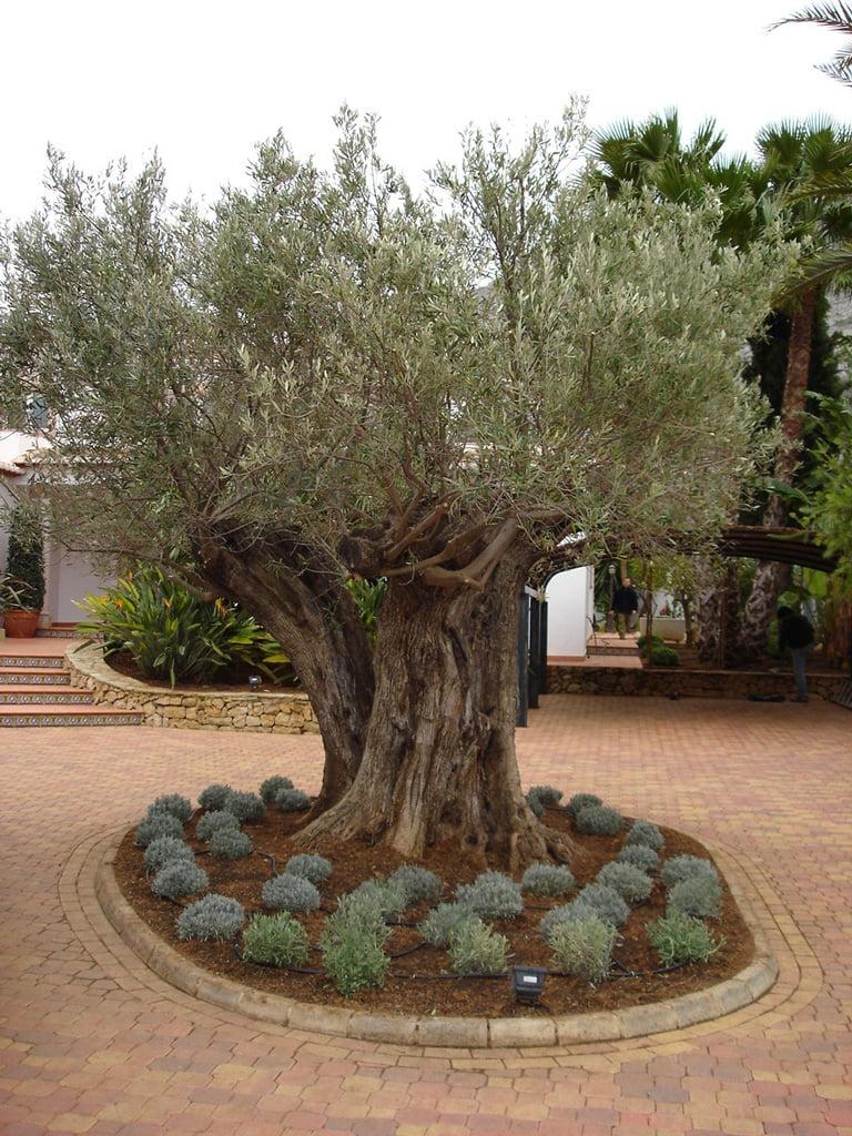 Vente d'arbres Dénia Natura Garden