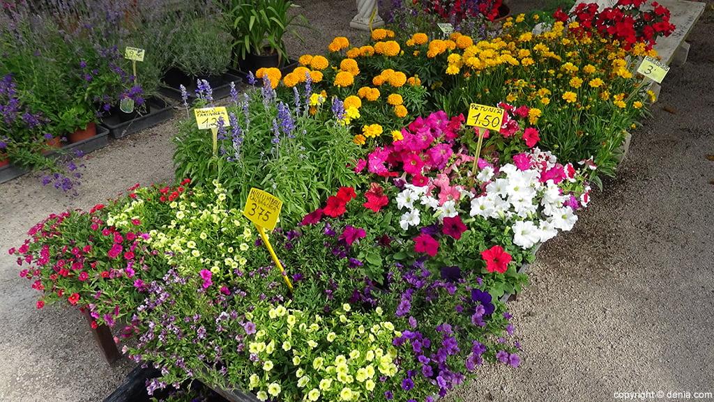 Plantas del vivero dc mantenimientos d for Viveros de plantas en lima