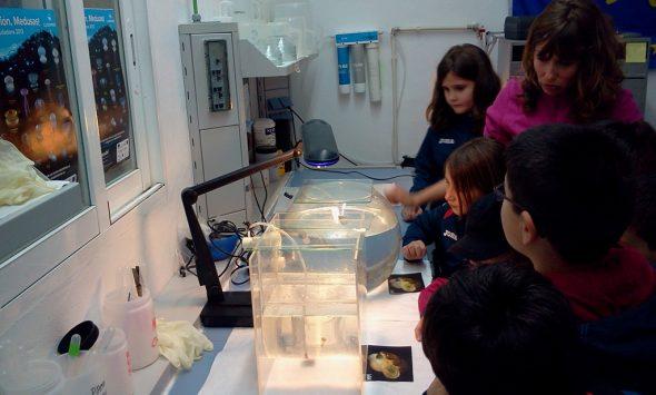 Visita de los escolares al laboratorio de medusas