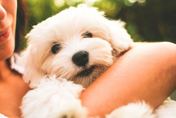Veterinary Clinic Dog El Saladar