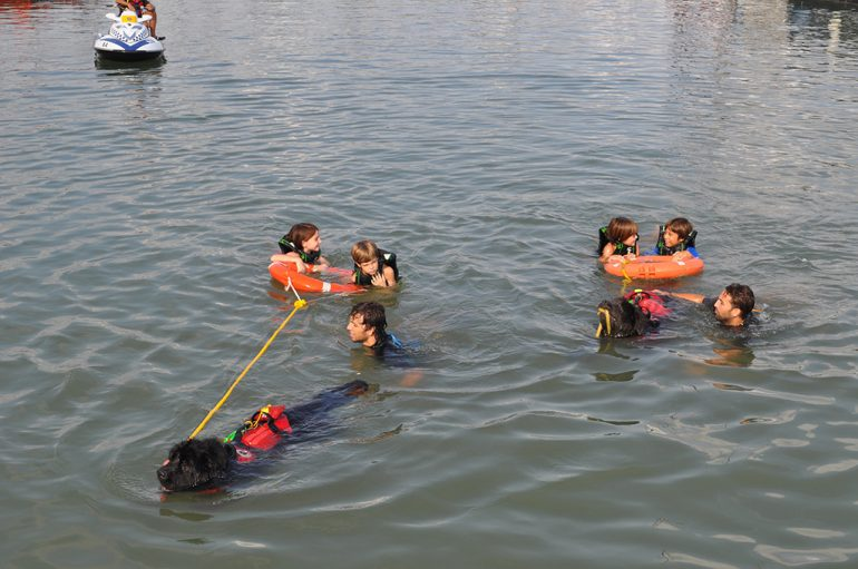 Mock rescue dogs