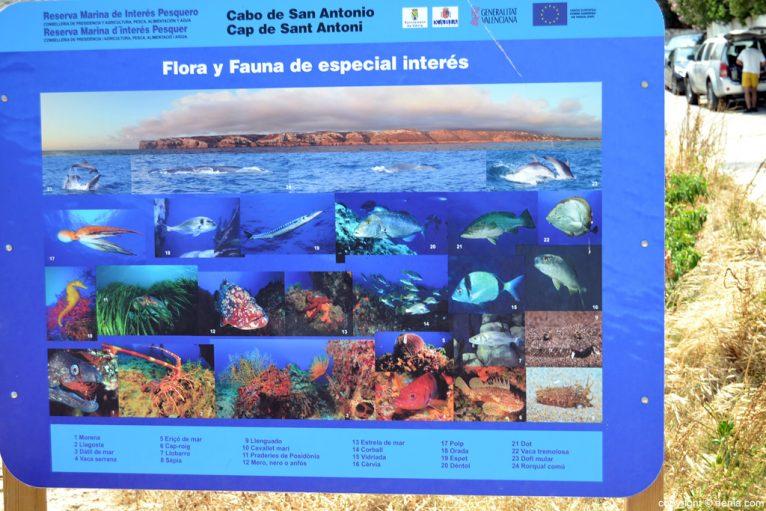 Cartel informativo reserva marina cabo San Antonio
