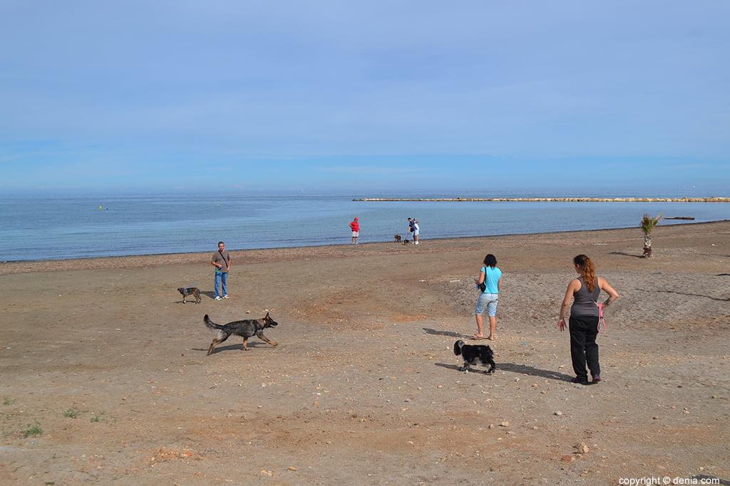 Ciudadanos reclamando una playa para perros en Dénia