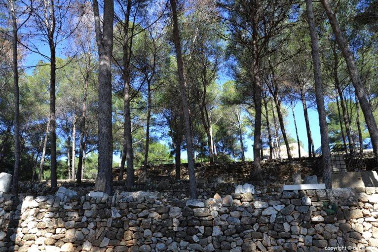 Castillo de Dénia - árboles