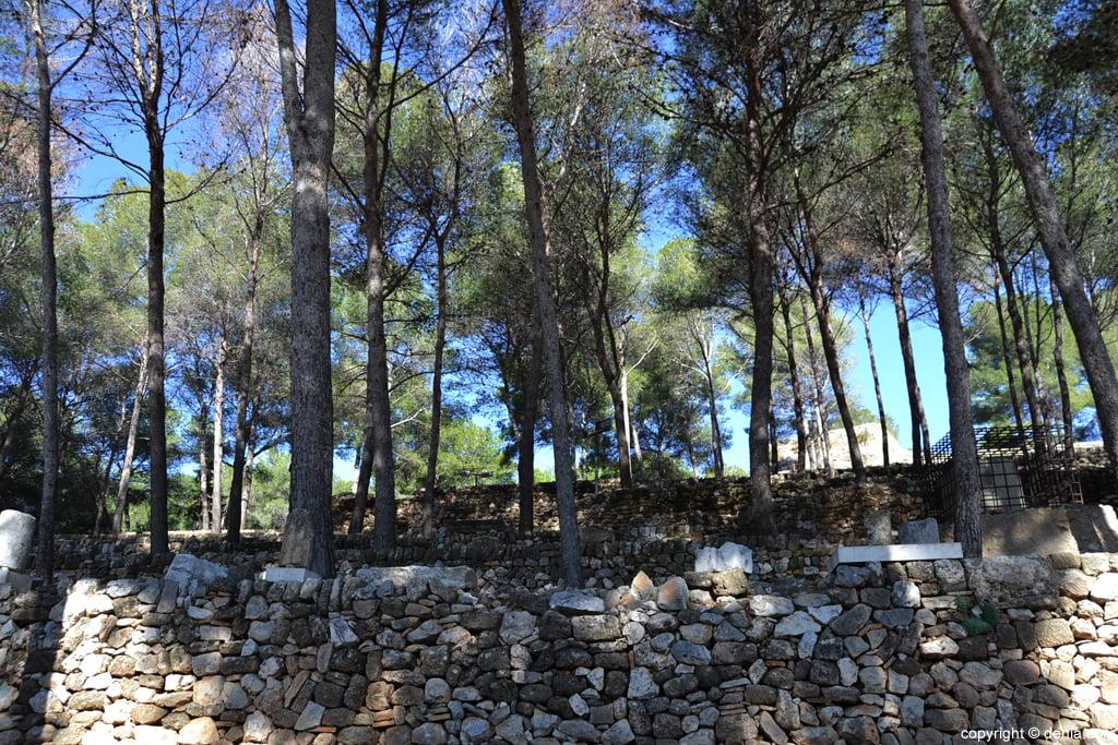 Castillo de Dénia – árboles
