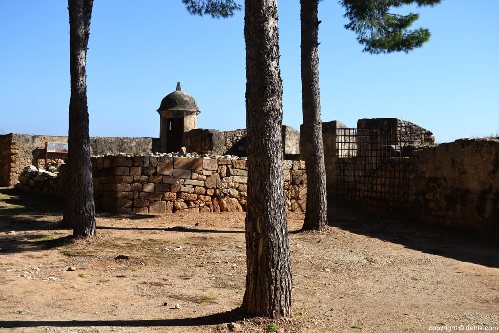 Castell de Dénia - pineda