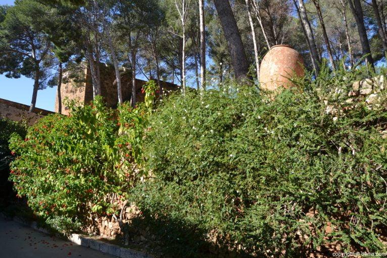 Castillo de Dénia - vegetación
