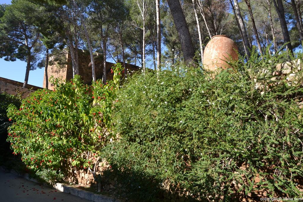 Castell de Dénia - vegetació