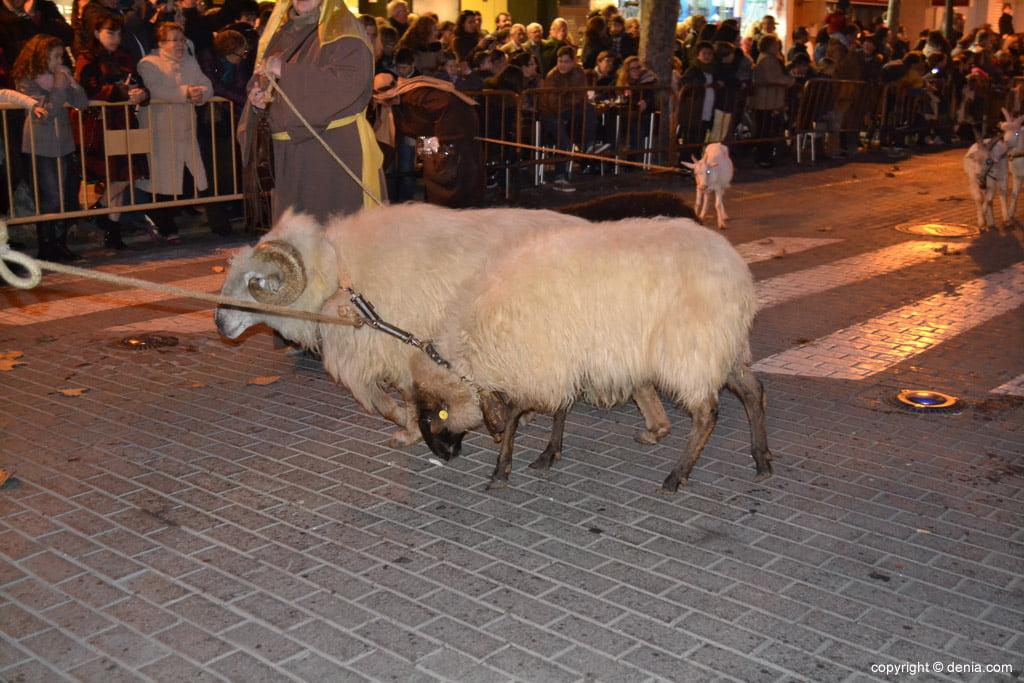 Cabalgata Reyes Magos 2015 – Cabras