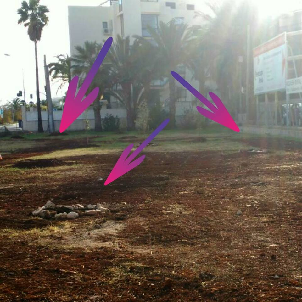 Árboles desaparecidos en Las Marinas