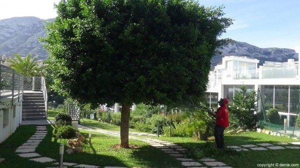 Conf a en m i c para el mantenimiento de tu jard n for Tu jardin con enanitos acordes