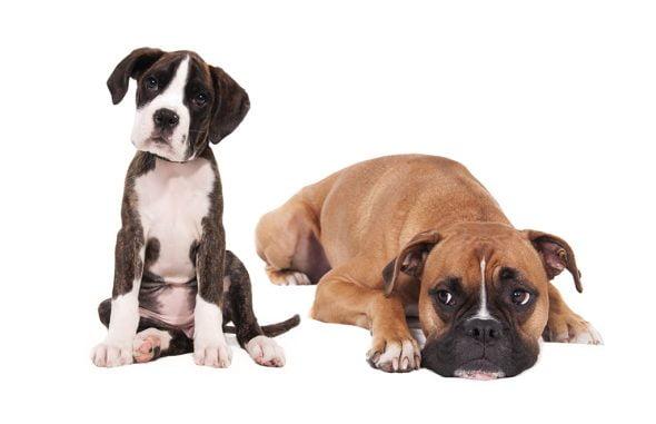 Perros Veterinaria El Saladar