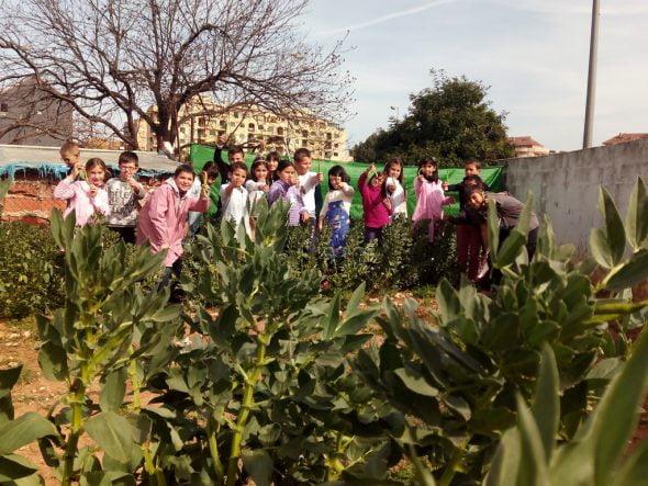 Huerto escolar colegio Pou de la Muntanya