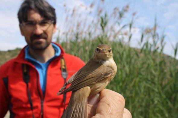 Observación de aves en la Marjal Pego-Oliva