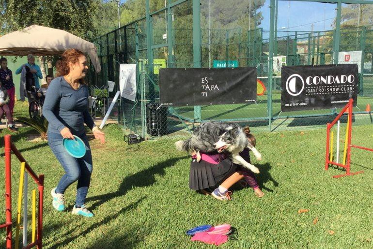 Sesión de Agility con perros de la raza Border Collins