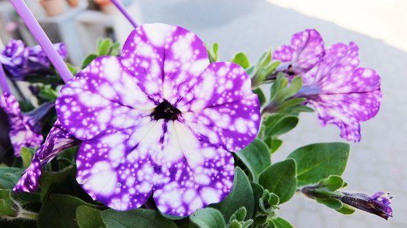 Trouvez une grande variété de fleurs pour donner la fête des mères ...