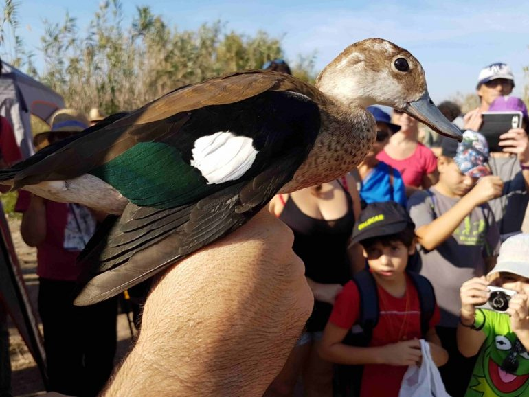World Bird Day in Dénia