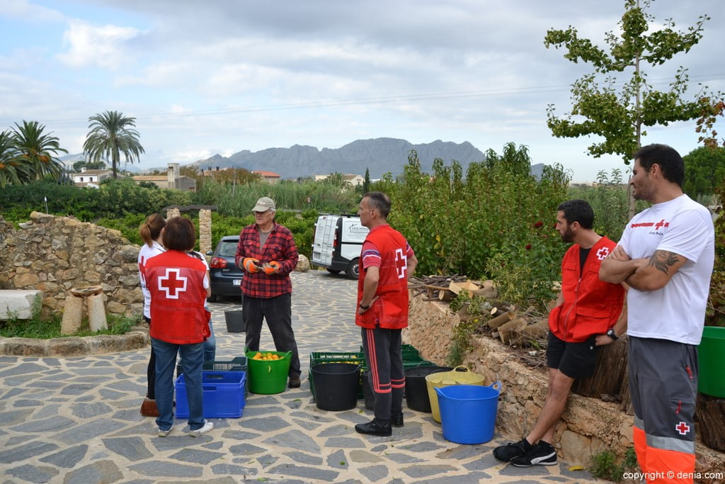 Voluntarios recogiendo naranjas para Cruz Roja