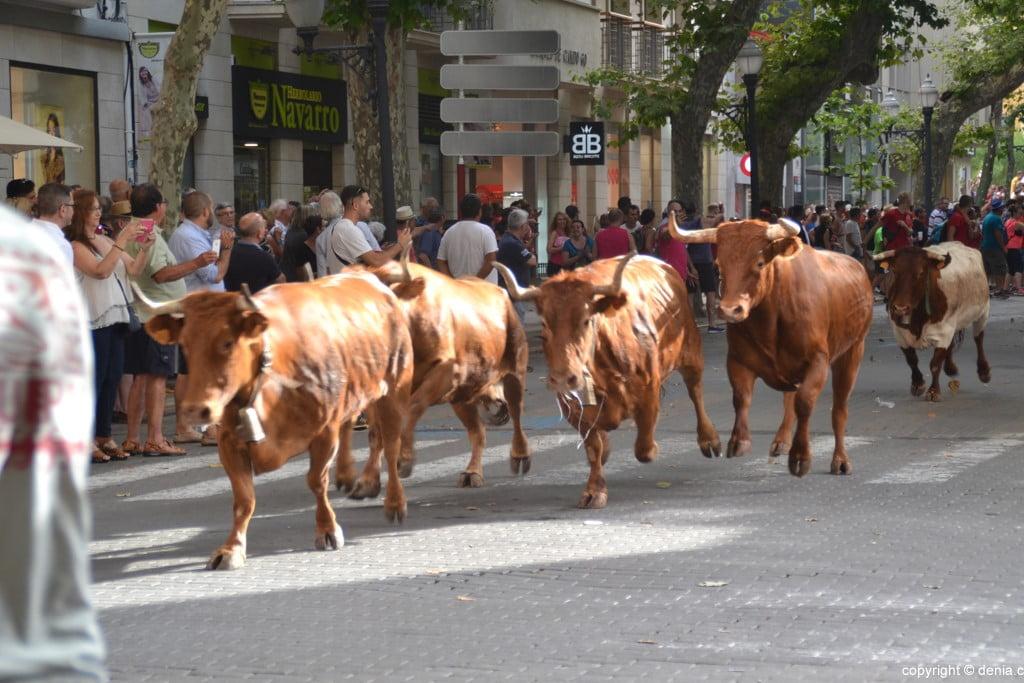 Primer día de fiestas de Dénia 2018 – Entrada de toros